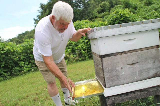 COVER---Bob-Wagner-Beekeeping_Bee2.jpg