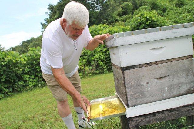 COVER---Bob-Wagner-Beekeeping_Bee2.jpg