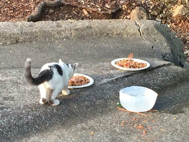 CSUN-FEAT-Stray-Cats3.jpg