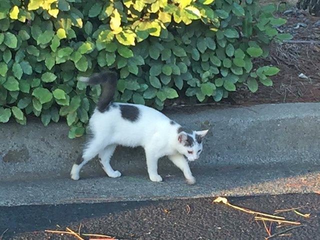CSUN-FEAT-Stray-Cats2.jpg