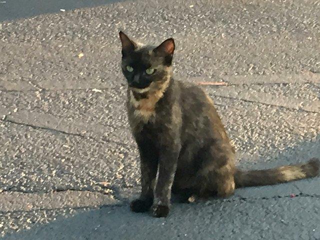 CSUN-FEAT-Stray-Cats1.jpg