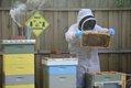CSUN FEAT Beekeeping3.jpg