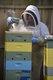 CSUN FEAT Beekeeping3c.jpg