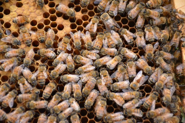 CSUN FEAT Beekeeping5b.jpg
