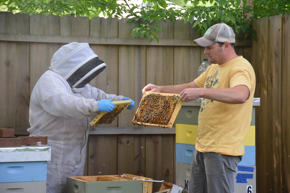 Bees buzzing in the backyard - Cahaba Sun
