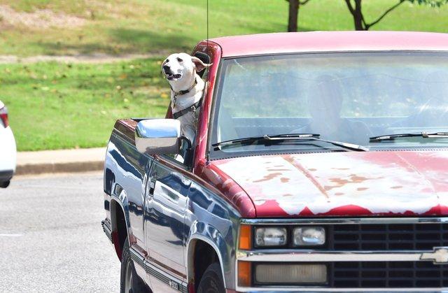 CSUN-COVER-Dogs-210822_NicholeAndLunaEN01.jpg